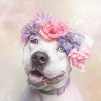 pitbulls_in_flowers_130814b2