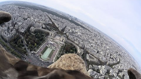 Fly Over Paris on the Back of an Eagle