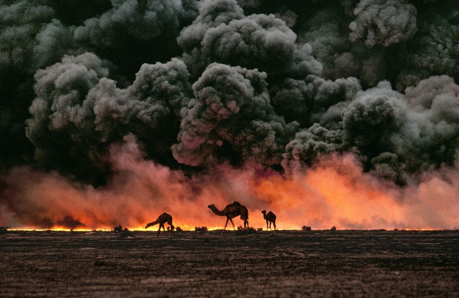 steve_mccurry_camels