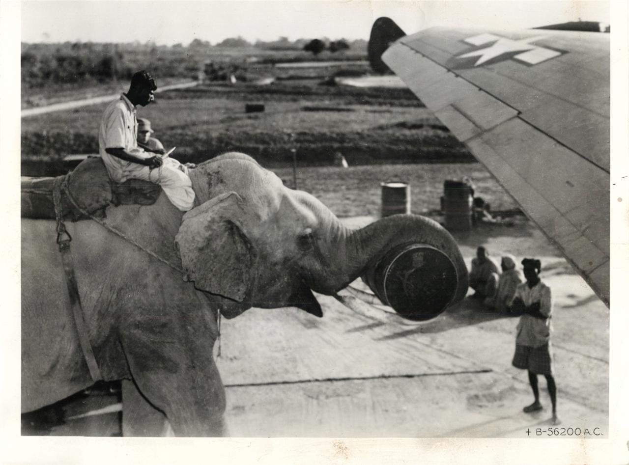 1940-es evek. Elefantokkal rakodnak be egy C-46-os teherszallitoba, valahol Delkelet-azsiaban.