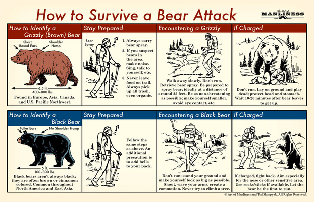 how_to_survive_a_bear_attack_281214
