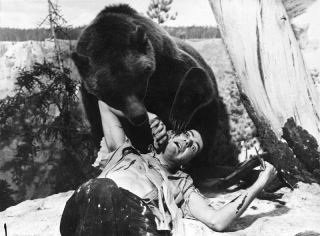 how_to_survive_a_bear_attack_281214pic