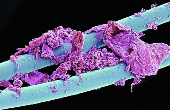 closeup of everyday things, microscopic view of things