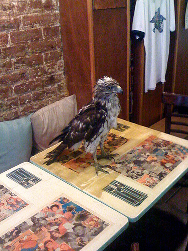 eagle_flies_in_chicken_place_200115_2
