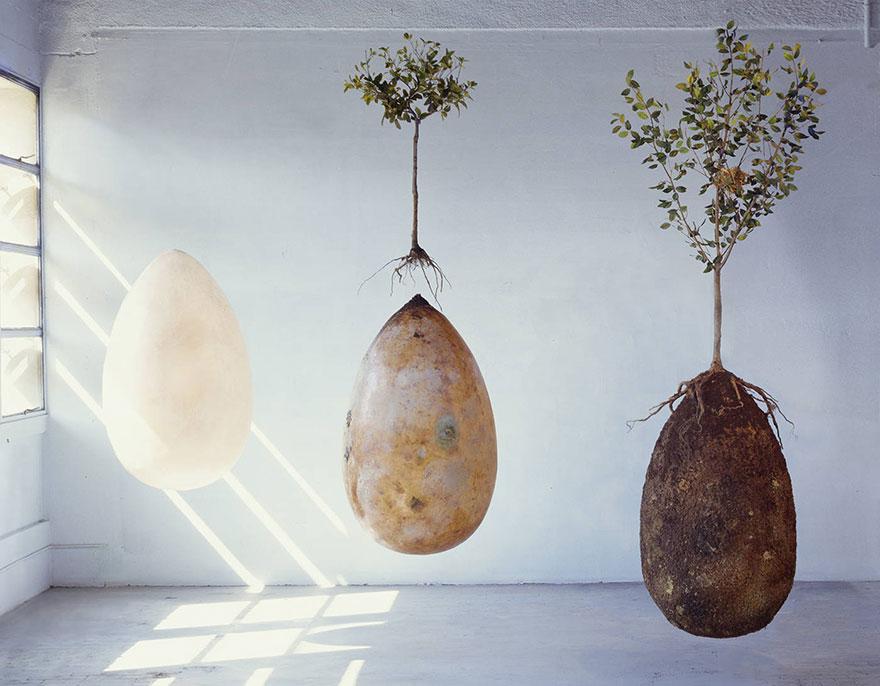 biodegradable-burial-pod-memory-forest-capsula-mundi-1