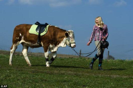 cow-riding-cow-girl3
