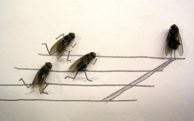 dead-fly-art1