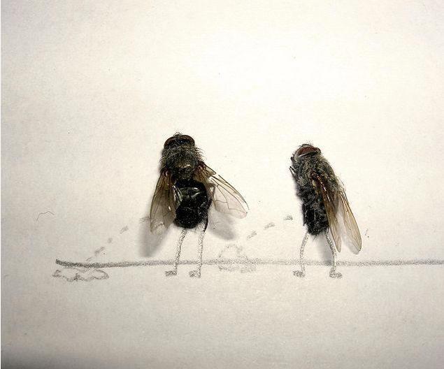 dead-fly-art2