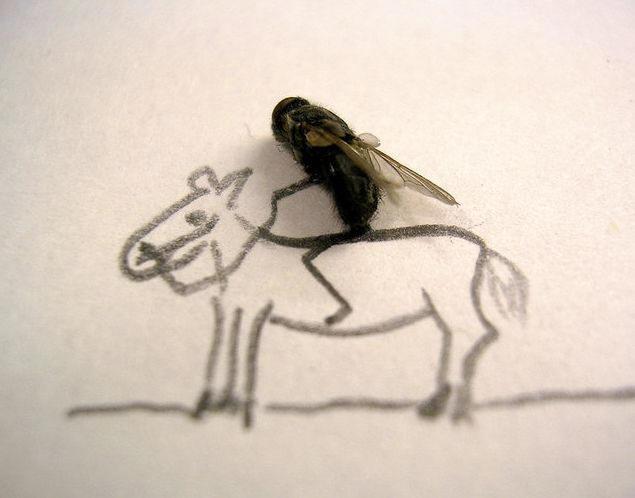 dead-fly-art4