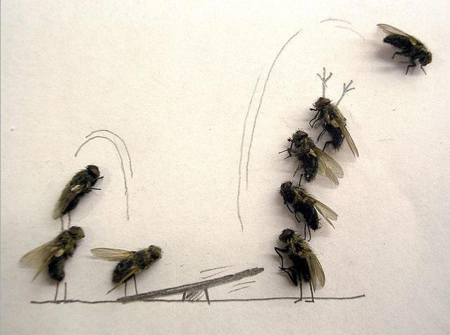 dead-fly-art5