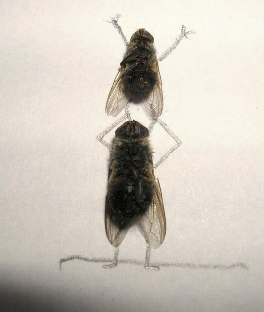 dead-fly-art8