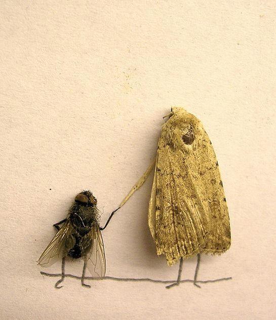 dead-fly-art9