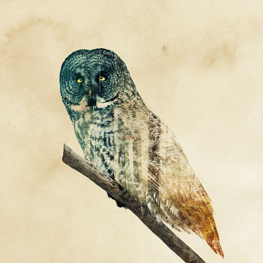 double-exposure-animal-photography-andreas-lie-22__880