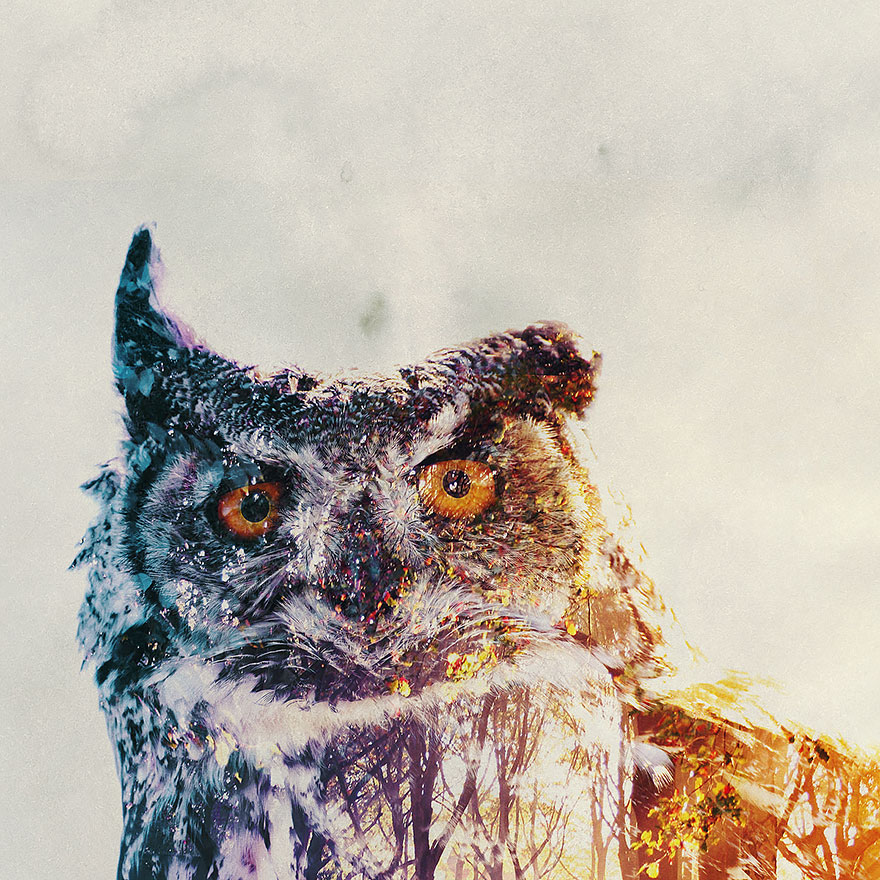 double-exposure-animal-photography-andreas-lie-23__880