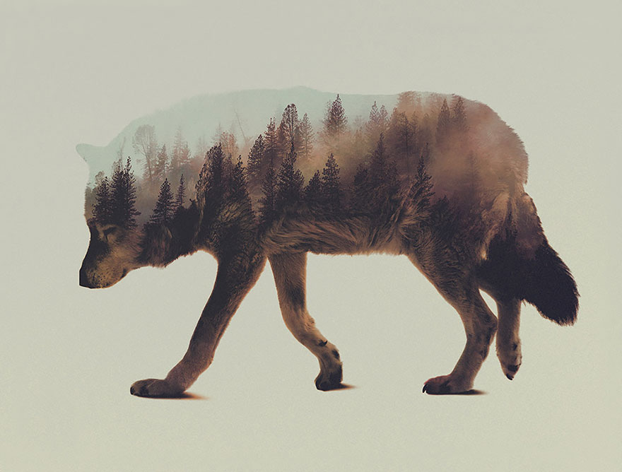 double-exposure-animal-photography-andreas-lie-6__880