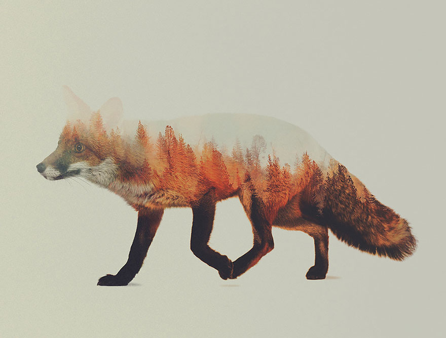double-exposure-animal-photography-andreas-lie-7__880