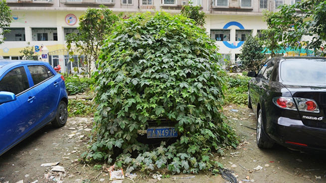 abandoned-car-grows-leaves-2
