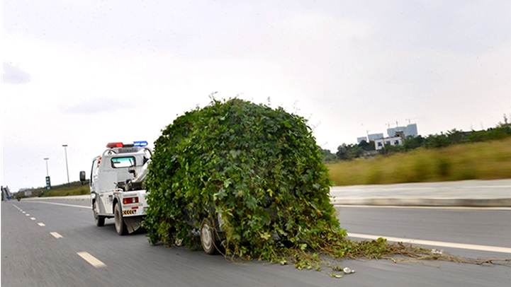 abandoned-car-grows-leaves-5