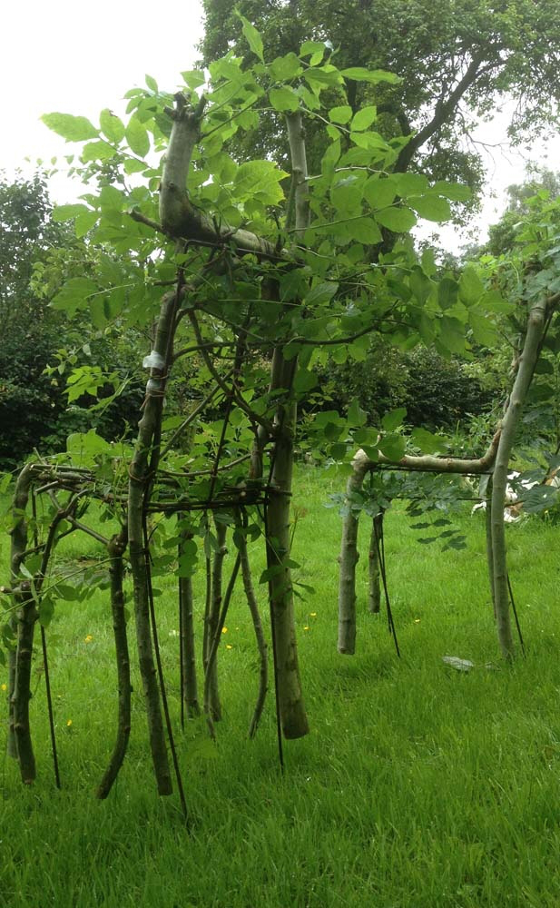 designer-grows-trees-into-chairs-3