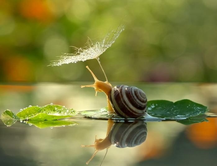 amazing-snail-photography-vyacheslav-mishchenko_1