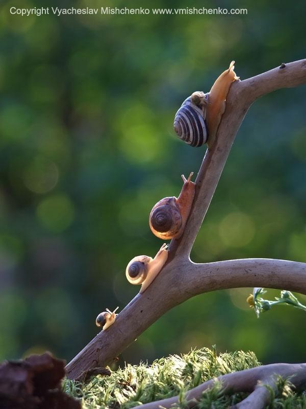 amazing-snail-photography-vyacheslav-mishchenko_10