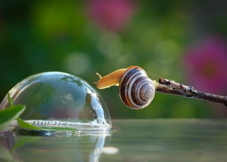 amazing-snail-photography-vyacheslav-mishchenko_11