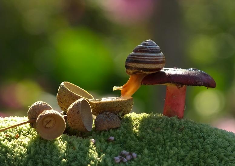 amazing-snail-photography-vyacheslav-mishchenko_12