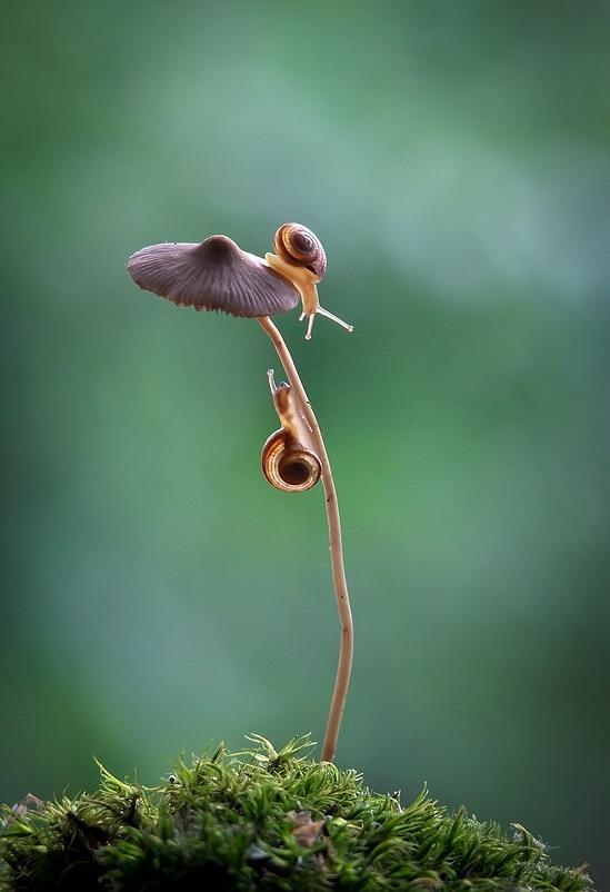 amazing-snail-photography-vyacheslav-mishchenko_14