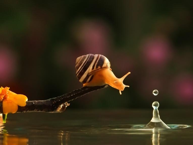 amazing-snail-photography-vyacheslav-mishchenko_15