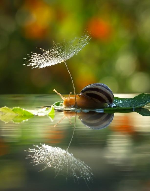 amazing-snail-photography-vyacheslav-mishchenko_16