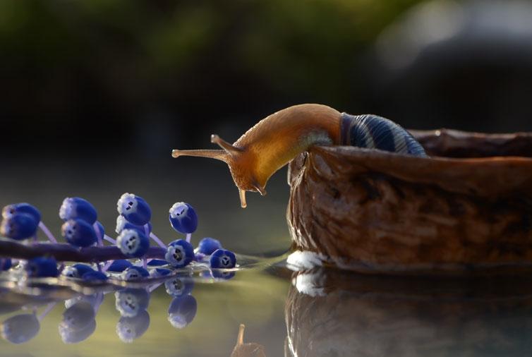 amazing-snail-photography-vyacheslav-mishchenko_20