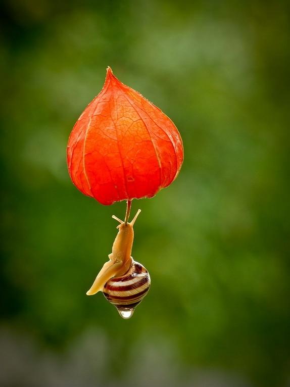 amazing-snail-photography-vyacheslav-mishchenko_3