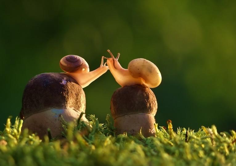 amazing-snail-photography-vyacheslav-mishchenko_4