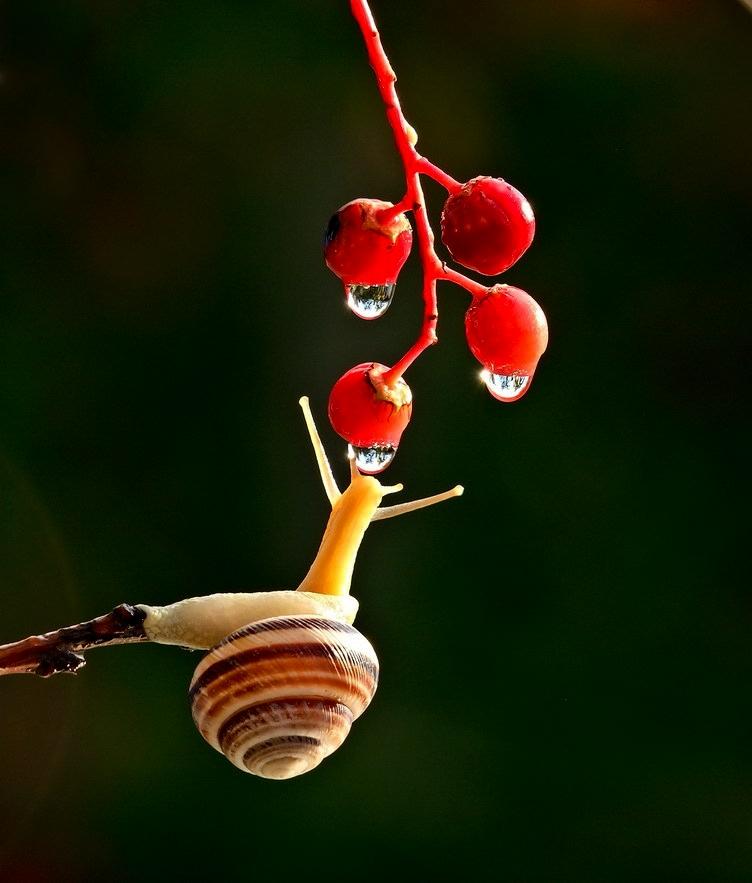 amazing-snail-photography-vyacheslav-mishchenko_5