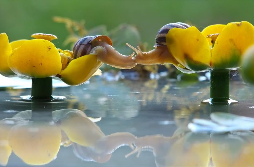 amazing-snail-photography-vyacheslav-mishchenko_7