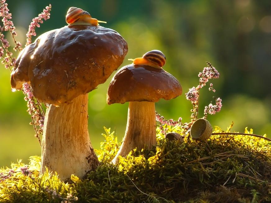 amazing-snail-photography-vyacheslav-mishchenko_9