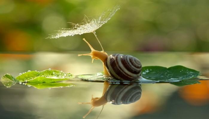 amazing-snail-photography-vyacheslav-mishchenko_fb