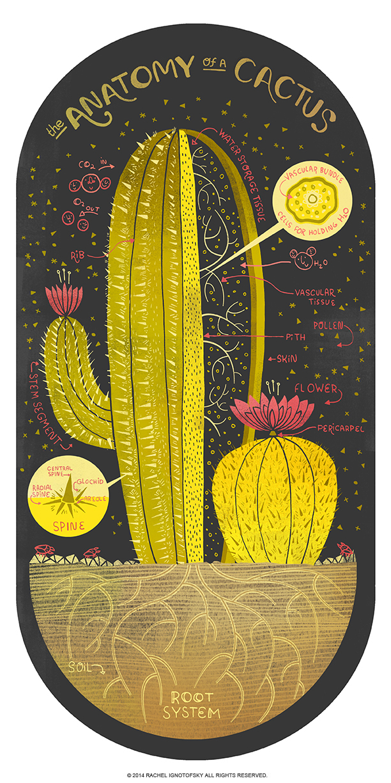 anatomy-of-a-cactus