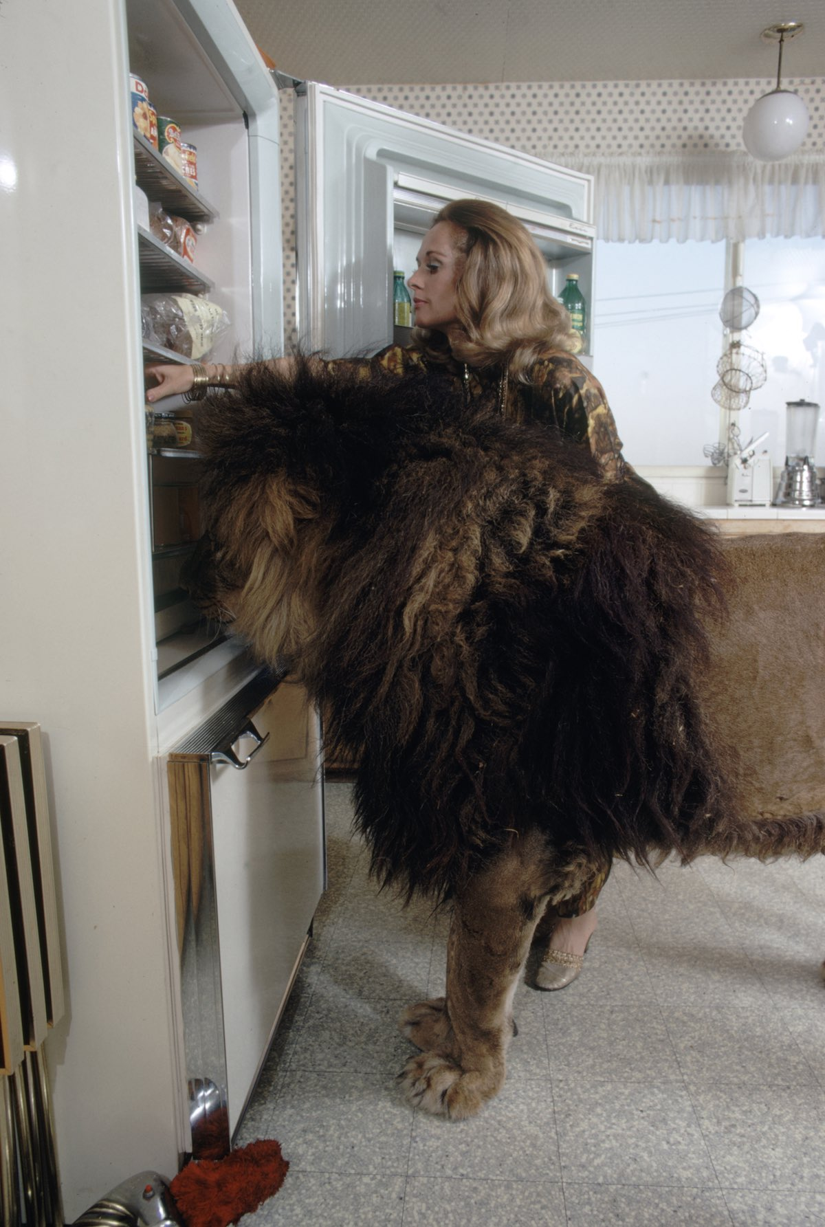 Subject: Tippi Hederen going in refridgerator with pet lion named Nei at her side. Sherman Oaks, California May 1971 Photographer- Michael Rougier Time Inc Owned Merlin-  1200554
