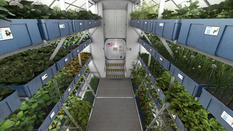 astronauts-on-iss-eat-veggies-grown-in-space-2