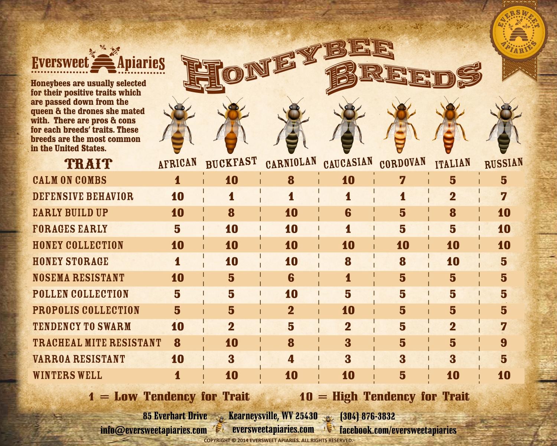 bee-breeds-2