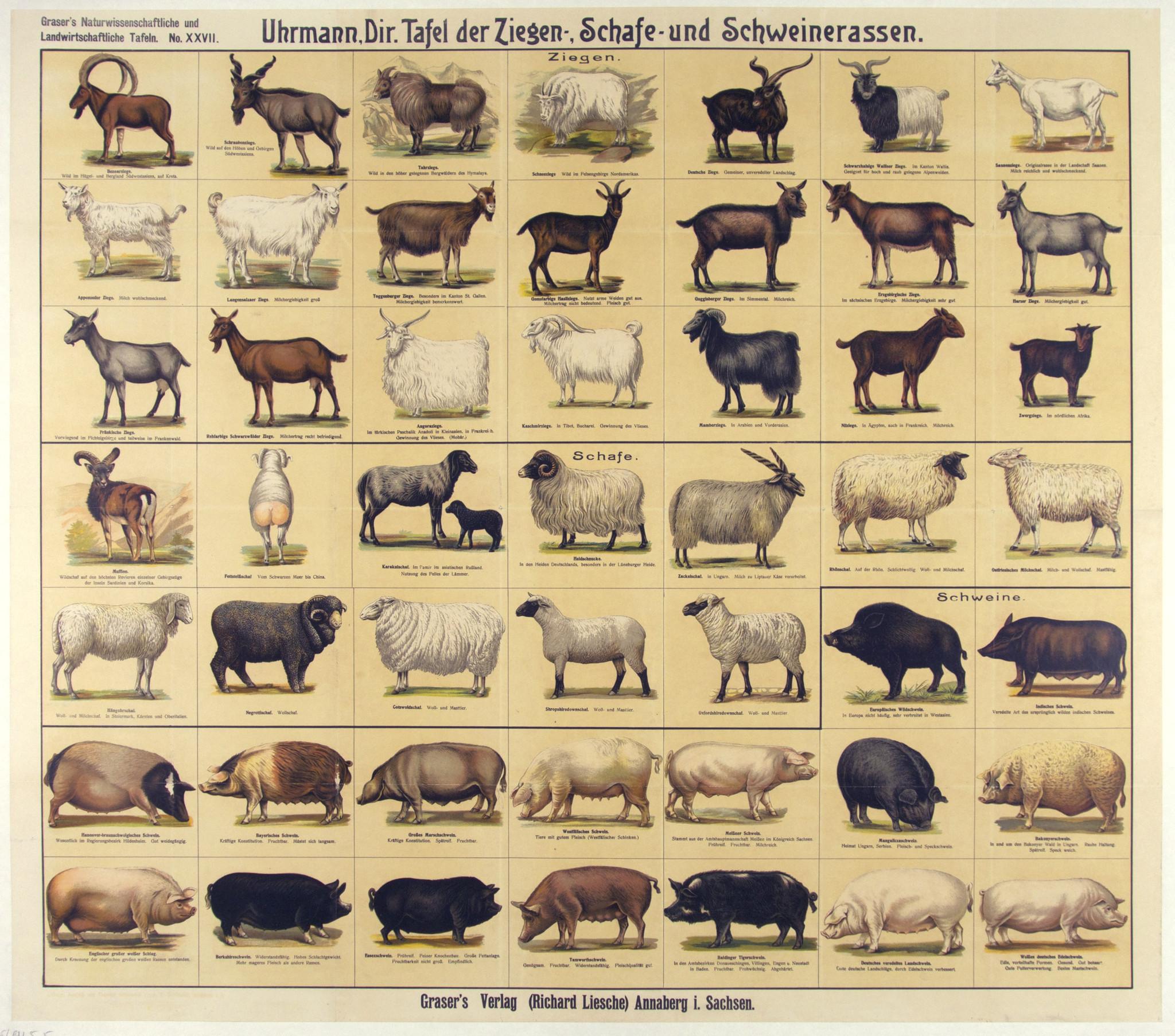 sheep-goat-swine-breed-chart