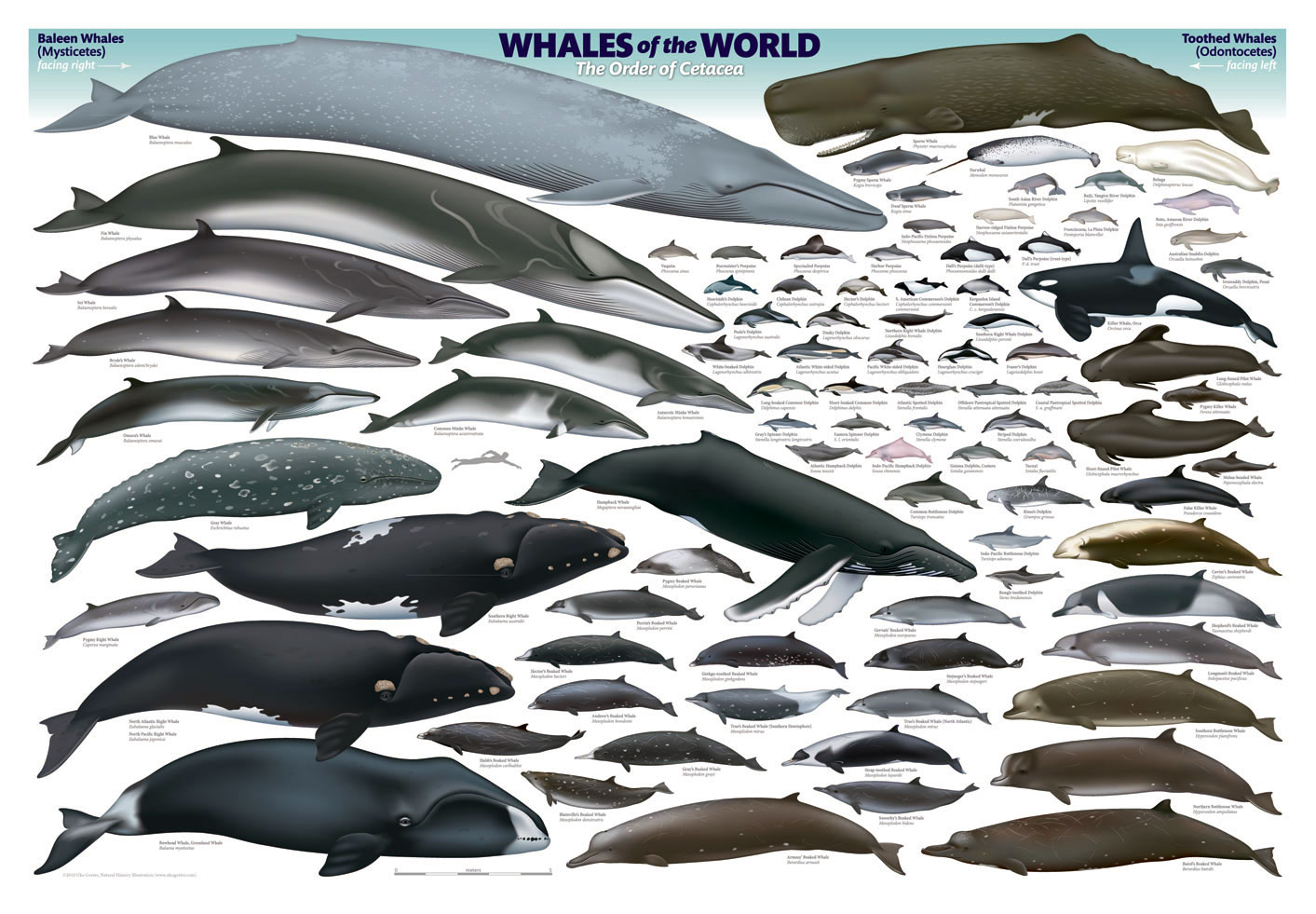 Breeds of Different Animals on Amazing Charts - Earthly Mission