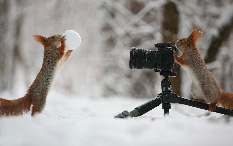 squirrel-snowball-fight-photos-by-vadim-trunov-1