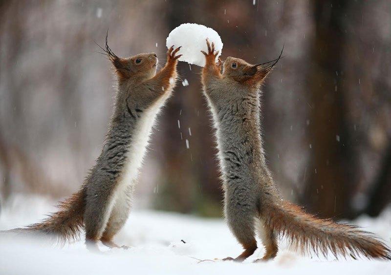 squirrel-snowball-fight-photos-by-vadim-trunov-2