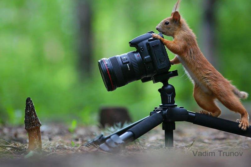 squirrel-snowball-fight-photos-by-vadim-trunov-4