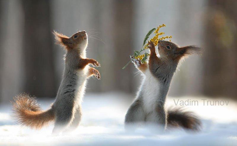 squirrel-snowball-fight-photos-by-vadim-trunov-6