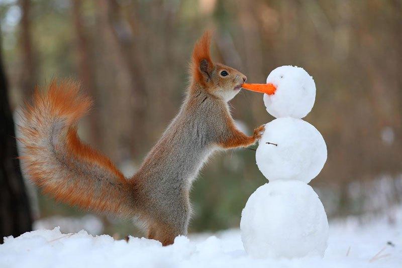 squirrel-snowball-fight-photos-by-vadim-trunov-8