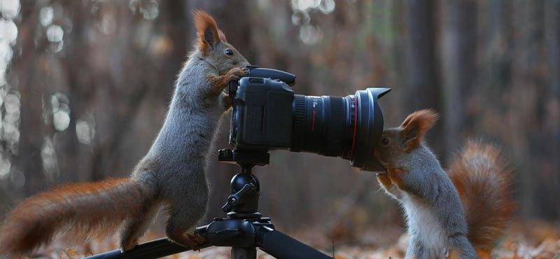 squirrel-snowball-fight-photos-by-vadim-trunov-9
