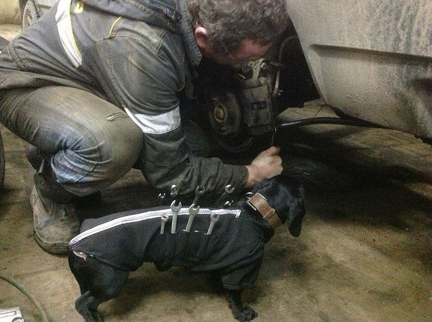 tool-dog-dachshund-suit-auto-mechanic-20